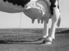 10-24-77_16_worlds_largest_cow_new_salem_north_dakota