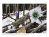 2018DSC2540, Public Forest Shooting Range, Along Jeep Trail, West of Colorado Springs, Colorado.jpg