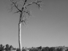 2010n018_tall_tree_v1_960x640_iphone_4