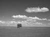 2010n030_tree_in_field_v1_960x640_iphone_4