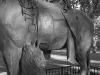 13_2011n065_02_horse_statue