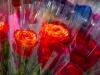 Roses For Sale_8311.jpg