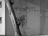 2012n033_08_tree-graffiti