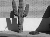 03_cactus_with_plug_phoenix_arizona