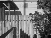 14_point_loma_back_yard_with_wooden_fence