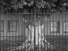 2012n041_11_gated-tree