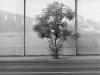 2012n042_4_underpass-tree