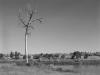 2010n018_tall_tree_v1