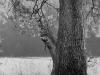"""•Oak Tree, Plate 8, Portfolio I – """"Basic Elements"""""""