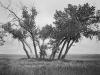2011n037_ten_trees_near_valier