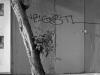 2012n033_08_tree-graffiti
