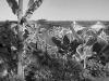 2012n052_3_grafitti-palm-trees