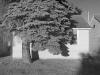 08_2011n044_4_house-tree