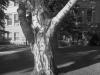 14_2011n061_11_tree