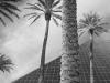 39_2011n074_06_palms-pyramid