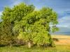 0422_trees_south-dakota
