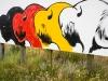 0525_buffalo_near-wounded-knee_south-dakota