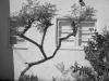 10_coronado_residence_with_tree