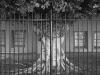 2012n041_11_gated-tree